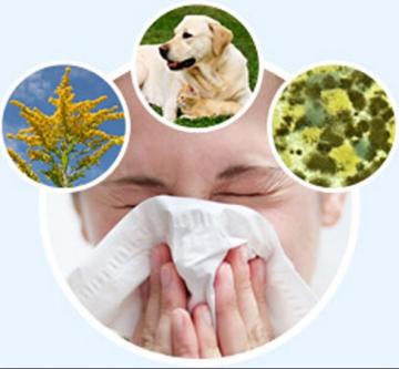 Популярные мифы о летней аллергии