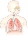 Рак легких: этапы развития и варианты лечения