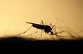 Могут ли насекомые переносить коронавирус