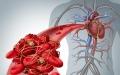 10 признаков густой крови: проверьте себя сами